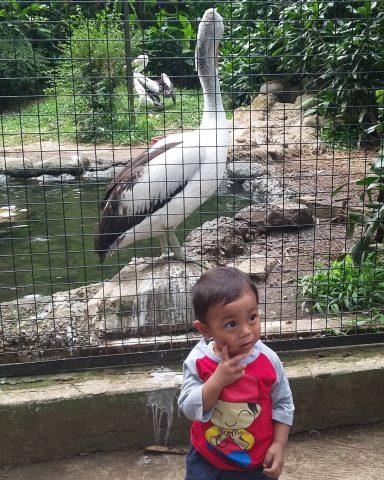 Burung kebun binatang bandung