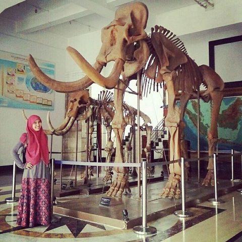 Kerangka gajah purba